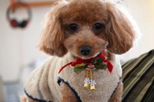 ENJU/犬の美容室(まろん1)